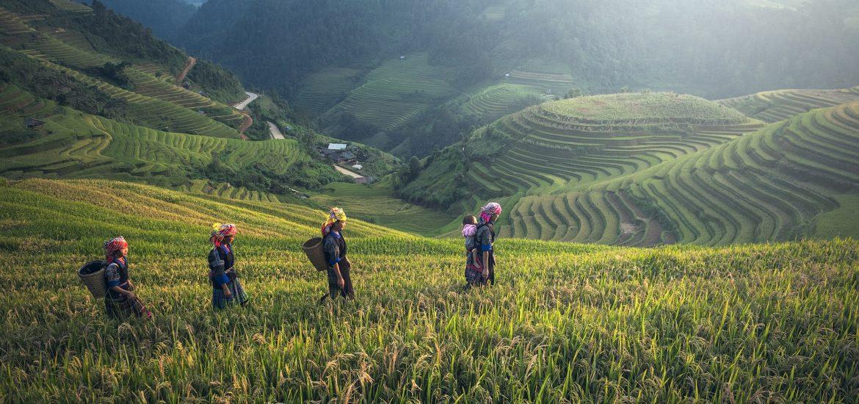 rizière tradition Cambodge